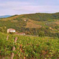 Die 14 Weinstraßen in der Toskana